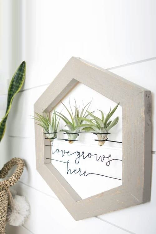 Air Plant Holder Love Grows Here Sign Boho Wall Decor